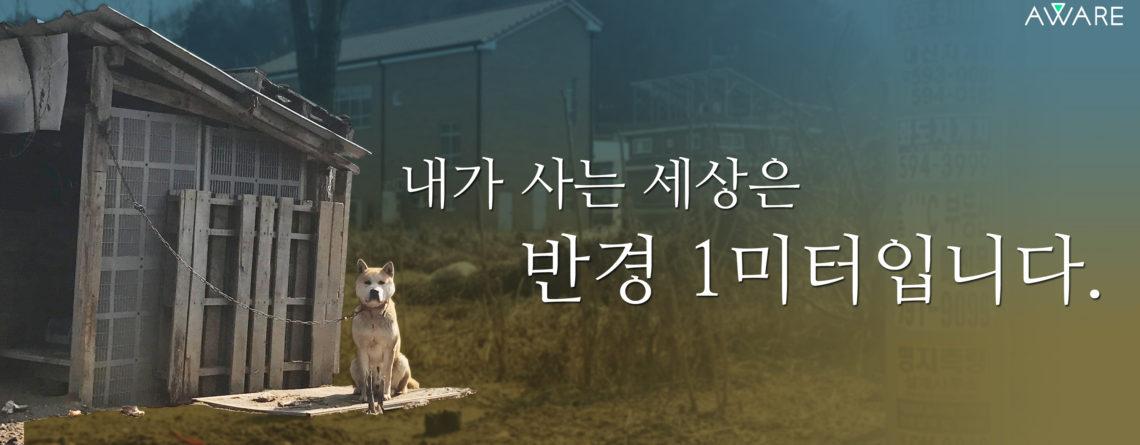 [캠페인] 1미터 줄 끝의 삶 – 마당에 사는 개도 반려동물입니다.